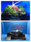 Thumbnail for aquariums0051566966603