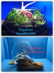 Thumbnail for aquariums0051582549142