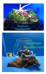 Thumbnail for aquariums0051583200742
