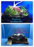Thumbnail for aquariums0051584164402