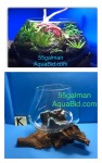 aquariums005&1621582802 Thumbnail