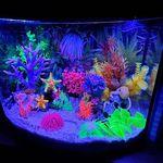 Thumbnail for aquariums0301568682629