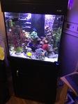 Thumbnail for aquariums1011553455027