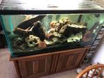 Thumbnail for aquariums1011569244202