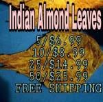 Thumbnail for breeding1555825204