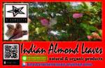 breeding&1559036592 Thumbnail
