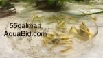breeding&1615087802 Thumbnail