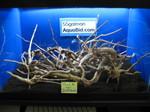 Thumbnail for driftwood1569122406