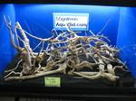 Thumbnail for driftwood1569122407