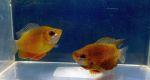 Thumbnail for fwanabantoid1572307506