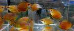 fwanabantoid&1634735580 Thumbnail