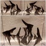 fwangelfish&1532310800 Thumbnail