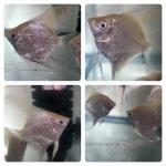 fwangelfish&1532321201 Thumbnail