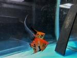 Thumbnail for fwangelfish1533174284