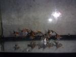 Thumbnail for fwangelfish1534471806