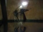 Thumbnail for fwangelfish1534473602