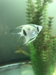 Thumbnail for fwangelfish1540057815