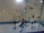 Thumbnail for fwangelfish1540085043