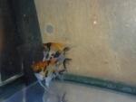 Thumbnail for fwangelfish1540085809
