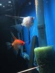 Thumbnail for fwangelfish1551201602