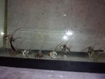 Thumbnail for fwangelfish1553394608