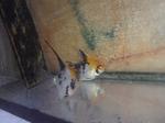 Thumbnail for fwangelfish1555811405