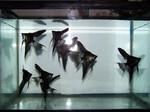Thumbnail for fwangelfish1555879874