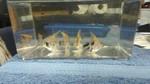 Thumbnail for fwangelfish1560887917