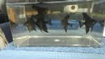 Thumbnail for fwangelfish1560890219