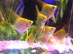 Thumbnail for fwangelfish1568950132