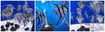 Thumbnail for fwangelfish1569124055