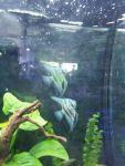 Thumbnail for fwangelfish1569129601