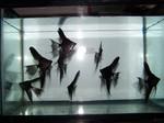 Thumbnail for fwangelfish1569190279