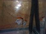Thumbnail for fwangelfish1569362555
