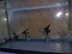 Thumbnail for fwangelfish1569374404