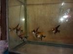Thumbnail for fwangelfish1569462000