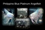 Thumbnail for fwangelfish1569773402