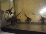 Thumbnail for fwangelfish1571268859