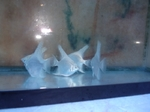 Thumbnail for fwangelfish1571364003
