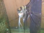 Thumbnail for fwangelfish1571871007