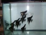 Thumbnail for fwangelfish1572308414