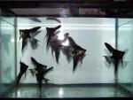 Thumbnail for fwangelfish1572308416