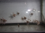 Thumbnail for fwangelfish1573699937