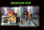 Thumbnail for fwangelfish1574195095
