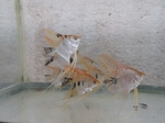 Thumbnail for fwangelfish1579402804