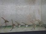 Thumbnail for fwangelfish1579402805