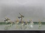 Thumbnail for fwangelfish1579491003