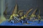 Thumbnail for fwangelfish1579533005