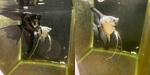 Thumbnail for fwangelfish1579539993