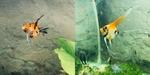 Thumbnail for fwangelfish1579729344